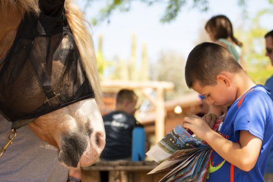 Thunderbolt families learn about equine therapy