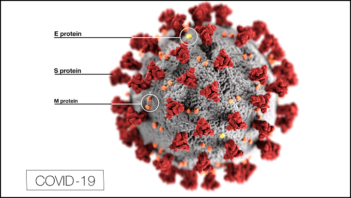 coronavirus morphology